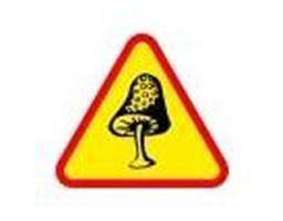 Diagnostic immobilier merule - Recherche champignons